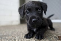 Unbearably Cute