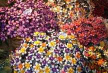 Todifiorita flower festival / A stunning event, every year in May! Todi with its most elegant and colorfull dress!