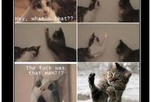 Funny & Cute Animals