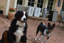 Pets at L'Auberge Provencale / Our loving pets, who greet our guests