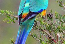 oiseaux multicoleur