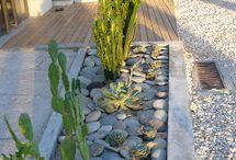 canteros de cactus