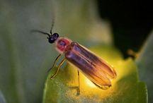 곤충  벌레  자연