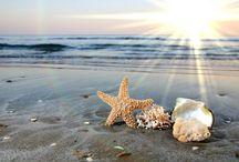 Starfish & Shell / by Brig DM