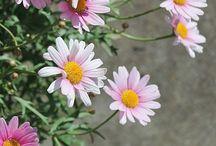 들꽃야생화