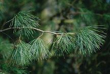 Greens | Guide to Winter Decor