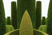 Formklippede planter