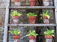 My 'one day' garden ideas