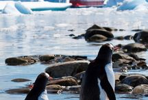 Travel: Antarctica