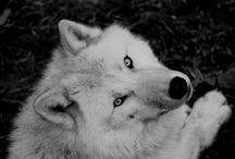 Wolves / by Brooke Smith