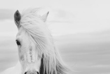 Hoofprints / Horses and riding related stuff! / by Mia Paletta