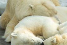 1 hibernation