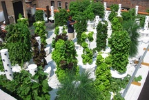 Food Producing Roofs