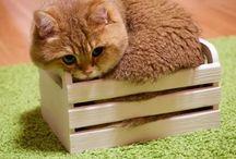 cats cats cats cats cats!!!!!!!