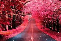 Everything PINK / Add all things pink | to join comment on a pin or message me @« g r a c e » |