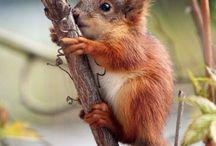 mókusok / mókucik