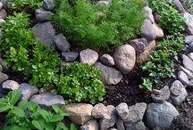 kert és növény
