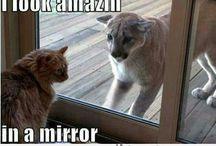 Mooi spiegelbeeld