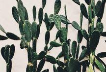 Plants / by Kayla Adams