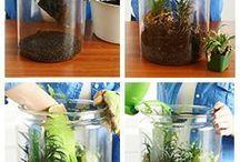 terrarium kaktüs