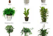 Front verandah potted plants