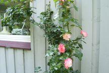 Garten / Die Jahreszeiten in unserem Garten