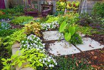Plants & Gardening / by Amber Joslin