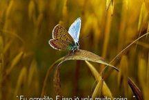 Frases & Pensamentos / by Rose Gualtieri