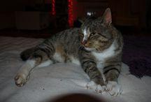 Kocia ferajna i jeden pies Lolka / Zdjęcia kotów, psów, zwierząt.