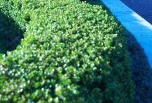 Gardening: Landscaping / by Cammie Huntley