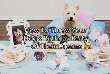 Dog Birthday Ideas / How To Throw Your Dog's Birthday Party Of Their Dreams. #dog #bithdayparty #decorations #ideas