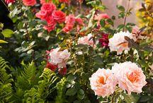 el color en el Jardin