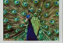 Pop Art - Colour Snapshots Blog