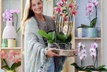 &PHALAENOPSIS / A pastel style icon with butterfly-like flowers and green shiny leaves.