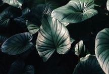 • Botanical •