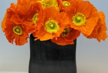 December Flowers / by Fashioned Events