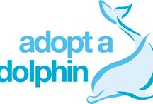 Adoptable UK Dolphins / Meet the Cardigan Bay gang! You can adopt one of these dolphins and follow its fortunes.