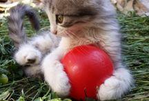 Ponpon little cat
