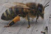 Imkern / Bilder rund um unsere Bienenhaltung