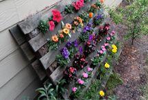 Gardens / Pots