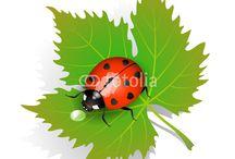 Ladybug on a leaf. / Oakley tat idea