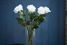 Fleur de Brissi / Everlasting blooms by Brissi