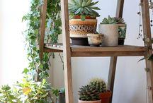 Interior/ Home