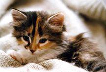 kittens / by olivia lehman