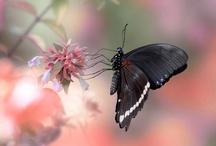 butterflies / by Jane Schofield