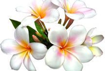 kvety výzdoba