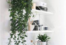 Indoor Plants | Lovell Homes / Best Indoor House Plants | Low Maintenance Plants | Lovell Homes