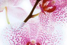 plants / by Cindy Kloeck
