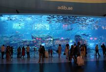 Travel with kids - Dubai / Thinks to see and do with kids in Dubai