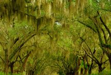 Savannah / There were 24 parks, with 22 surviving. It is my hope to find photos of each one. / by Sandra Avey